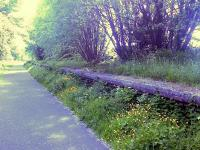 Looking west to Lochwinnoch, this shows where platform 1 was, platform 2 was in among the trees. This stretch of trackbed is now part of the Cycle Network.<br><br>[Graham Morgan&nbsp;14/06/2006]