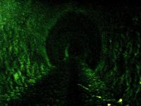 Deep within the tunnel. Sources suggest that the Royal Train sought protection here during WW2 and that Cosmic Rays were first indentified/invented here.<br><br>[Colin Harkins&nbsp;16/04/2006]