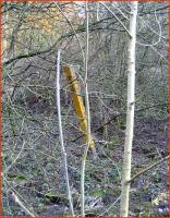 Surviving milepost in the undergrowth near Marton Junction in March 2007.<br><br>[John McIntyre&nbsp;/03/2007]