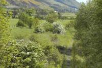 Back to nature at Menstrie on 15 May 2007. View east from road bridge. <br><br>[Bill Roberton&nbsp;15/05/2007]