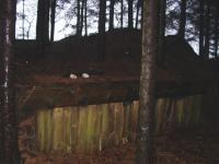 Loading bank in the gloom of a forest at Velvet Hall.<br><br>[Ewan Crawford&nbsp;27/12/2002]