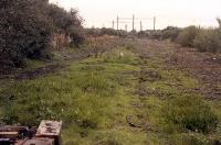Looking northwest towards Shettleston Junction and the stub of the NB line to Bothwell and Hamilton from the boundary fence in 1988. Track had continued to the camera location until shortly before the photograph, before being cut back - note buffers in the middle distance. The stub had been electrified.<br><br>[Ewan Crawford&nbsp;//1988]