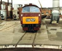 D1023 <I>Western Fusiler</I> stands at Swindon works on 6 June 1981.<br><br>[Colin Alexander&nbsp;06/06/1981]