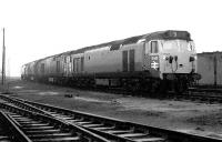 Top link locomotive lineup at Polmadie shed on 18th January 1970. Nearest the camera is D445, followed by D448, D425 and D430.<br><br>[John Furnevel&nbsp;18/01/1970]