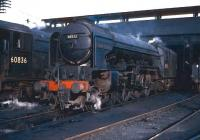 Peppercorn A2 Pacific 60532 <I>Blue Peter</I> on shed at Dundee, Tay Bridge, alongside stablemate V2 no 60836. The photograph is thought to have been taken on 29 October 1965. The Pacific had arrived at Tay Bridge depot in 1962 after 11 years at Ferryhill, with the V2 moving north from St Margarets in 1965. Withdrawal for both locomotives came in December of 1966, some 6 months prior to the official closure of 62B itself and, while 60532 went on to become something of a <I>preservation celebrity</I>, 60836 was not so lucky, being eventually cut up at Motherwell Machinery and Scrap, Wishaw, in July 1967.<br><br>[Robin Barbour Collection (Courtesy Bruce McCartney)&nbsp;29/10/1965]