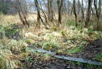 This uninteresting circle of concrete in a wood was in fact the only remains of the terminus at Aberfoyle in 1989. This was the filled in turntable pit. I believe the site has since been built on. View looks away from the terminus.<br><br>[Ewan Crawford&nbsp;//1989]