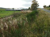 Beneath this fine display of weeds lies the trackbed leading to Broomhill. The A95 which has to be crossed is on the right. Farm structures prevent a direct line-of-sight photo of the Grantown end of the trackbed.<br><br>[John Gray&nbsp;15/10/2008]