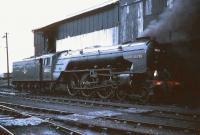 A2 Pacific 60532 <I>Blue Peter</I> stands alongside the coaling stage at Ferryhill in 1965.<br><br>[Robin Barbour Collection (Courtesy Bruce McCartney)&nbsp;//1965]