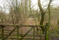 View along the trackbed of the 1883 Swindon and Highworth Railway in January 2009. This section of the line, which closed around 1965, passes through a wood near Highworth and is now used as a footpath. <br><br>[Peter Todd&nbsp;11/01/2009]