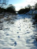 <I>Lonely planet</I>...the joys of walking in fresh snow. View back along the trackbed of the Berwickshire Railway near Chirnside in February 2009.<br><br>[Ian Whittaker&nbsp;13/02/2009]