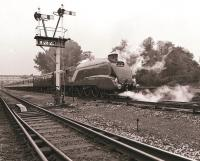 LNER A4 Pacific 4468 <I>Mallard</I> northbound with a special at Princes Risborough on 12 October 1986.<br><br>[Peter Todd&nbsp;12/10/1986]