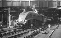 60031 <i>Golden Plover</i> at the east end of Edinburgh Waverley on 18 April 1965 with <I>Scottish Rambler No 4</I>, recently arrived from Glasgow Queen Street.<br><br>[K A Gray&nbsp;18/04/1965]