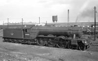 Gresley A3 Pacific no 60088 <I>Book Law</I> in the sidings alongside Heaton shed around 1959.<br><br>[K A Gray&nbsp;//1959]