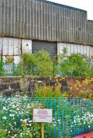 Sign at the former Bathgate MPD: 'Japanese Knotweed No unauthorised access'. Triffids in development in former Bathgate shed?<br><br>[Ewan Crawford&nbsp;12/07/2009]
