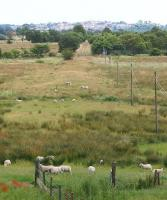 Looking east towards the site of the former MoD Inchterf military shell testing range, once referred to locally as <I>The Gun Range</I>. Taken just outside Kirkintilloch in July 2009. The establishment was closed by the MoD in the mid 1990s.<br> <br><br>[David Forbes&nbsp;/07/2009]