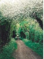 Much of the 'Nickey Line' from Harpenden to Hemel Hempstead has a good cycle riding surface. Some parts, however, have rather stiff gradients!<br><br>[Ken Strachan&nbsp;05/05/2007]