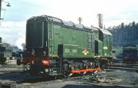 One of a batch of 6 class 08 diesel shunters to arrive at St Margarets in the spring of 1959, this one numbered D3733. The locomotive is standing on the north side of the depot on 2 May, looking as though it's still waiting for the paint to dry.  <br><br>[A Snapper (Courtesy Bruce McCartney)&nbsp;02/05/1959]