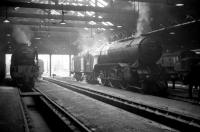 Looking out from the back of St Margarets shed on 16 April 1965 A1 Pacific no 60145 <I>St Mungo</I> stands on the left with V2 60955 in the centre. Over to the right a <I>Peak</I> hides in the shadows. [Note: the Pacific had  worked the previous day's 9.30am York - Glasgow Queen Street, possibly as far as Edinburgh.] [See image 26768]<br><br>[Robin Barbour Collection (Courtesy Bruce McCartney)&nbsp;16/04/1965]