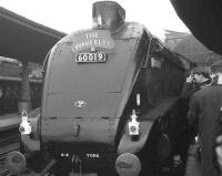 Close encounter with 60019 <I>Bittern</I> at Newcastle Central on 12 November 1966. The A4 is at the head of <I>The Waverley</I> RCTS special which ran York-Newcastle-Carlisle-Hawick-Edinburgh and back via the ECML. <br> <br><br>[K A Gray&nbsp;/11/1966]