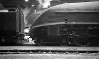 Scene inside St Margarets shed on 6 February 1965. Gresley A4 Pacific 60024 <i>Kingfisher</I> stands nearest the camera, with sister locomotive 60027 <I>Merlin</I> beyond. <br><br>[K A Gray&nbsp;06/02/1965]