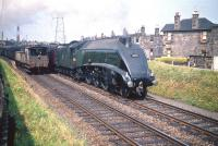 An admiring glance from the guard of a passing freight towards 60031 <I>Golden Plover</I> as the A4 coasts through Joppa station at the head of an up ECML service in July 1959. Photographed from the former pedestrian ramp near the footbridge on South Morton Street giving access to the westbound platform.<br><br>[A Snapper (Courtesy Bruce McCartney)&nbsp;25/07/1959]