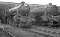 B1 61051 stands alongside Black 5 45102 on a busy Blackpool Central shed (24E) in 1962. The 5 was a resident but the B1 looks like one of the many locomotives that visited 24E after working into Blackpool Central on excursion trains at that time, in this case probably from the Sheffield area. The shed eventually closed in 1964 along with the large station it was built to serve [see image 30284] and much of the area is now a car park.<br><br>[K A Gray&nbsp;23/09/1962]