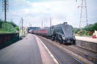 Haymarket A4 Pacific no 60012 <I>Commonwealth of Australia</I> starts to pick up the pace with a southbound train as it passes the well tended platforms of Joppa station in the summer of 1959. <br><br>[A Snapper (Courtesy Bruce McCartney)&nbsp;08/08/1959]