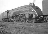 Portrait of A4 Pacific no 60013 <I>Dominion of New Zealand</I> standing at the west end of Gateshead shed in the 1960s. The streamliner would doubtless be diagrammed to take an up ECML service out of Newcastle Central later that day returning home to Kings Cross.<br><br>[K A Gray&nbsp;//]