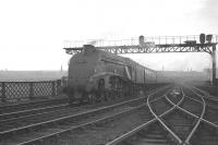 A4 no 60021 <I>'Wild Swan'</I> has just crossed the Tyne from Newcastle Central on a dull looking day in the 1960s.  The Pacific is about to leave the King Edward Bridge with an up ECML service for Kings Cross. <br><br>[K A Gray&nbsp;//]