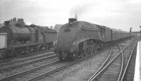 60023 <I>Golden Eagle</I> receives a salute from the driver of 64450 on a passing goods train at the south end of Doncaster station in July 1961 as the A4 is about to run through on the centre road with the 10.00 Kings Cross - Edinburgh Waverley. <br><br>[K A Gray&nbsp;29/07/1961]