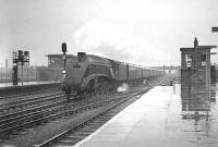 One of the Gateshead batch of A4s no 60005 <I>Sir Charles Newton</I> takes an ECML service for Kings Cross at speed through a very wet Doncaster station in April 1963. The train in this case is the 12.26pm ex-Newcastle Central.<br><br>[K A Gray&nbsp;11/04/1963]