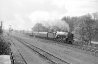 A1 Pacific no 60151 <I>Midlothian</I> leaves Longniddry in April 1964 with the 3.30pm Edinburgh - Berwick stopping train. Nearest the camera is the down siding and, beyond that, the Haddington branch (closed completely in 1968). <br><br>[Robin Barbour Collection (Courtesy Bruce McCartney)&nbsp;/04/1964]