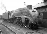 Gresley A4 Pacific no 60004 <I>William Whitelaw</i> stands on shed at 61B Aberdeen Ferryhill during the A4 twilight years of the 1960s. The locomotive was finally withdrawn from here by BR in July of 1966 and cut up at Motherwell Machinery & Scrap, Wishaw, around three months later.<br><br>[Robin Barbour Collection (Courtesy Bruce McCartney)&nbsp;//]