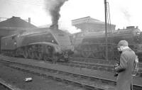 <I>Phew... what a dirty, smelly, smoky old shed this is... in fact it's almost perfect!</I> Happy days at Doncaster in the early sixties - Pacifics on shed include A4 no 60010 <I>Dominion of Canada</I> and A1 no 60139 <I>Sea Eagle</I>.<br><br>[K A Gray&nbsp;24/02/1963]