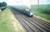 The 'non-stop' passing Drem. Gresley A4 Pacific no 60027 <I>Merlin</I> brings <I>The Elizabethan</I> through Drem and on towards Waverley in the summer of 1958.<br><br>[A Snapper (Courtesy Bruce McCartney)&nbsp;30/06/1958]
