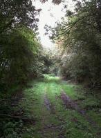 A delightful woodland scene, but distinctly mushy underfoot. View along the SMJ trackbed in October 2010, looking east towards Ravenstone Wood Junction.<br><br>[Ken Strachan&nbsp;02/10/2010]