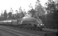 A4 Pacific no 60031 <I>Golden Plover</I> photographed near the border at Kershopefoot on 18 April 1965 with the 1X50 BLS <i>Scottish Rambler No 4</I> railtour bound for Carlisle.<br><br>[K A Gray&nbsp;18/04/1965]