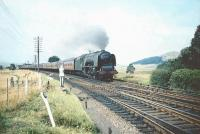 Stanier Coronation Pacific no 46224 <I>Princess Alexandra</I> approaching Symington at speed on 29 August 1959 with the up <I>Mid-day Scot</I> heading for Euston.<br><br>[A Snapper (Courtesy Bruce McCartney)&nbsp;29/08/1959]