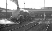 A4 Pacific no 60007 <I>Sir Nigel Gresley</I> stands outside Balornock Shed in June 1965.<br><br>[K A Gray&nbsp;07/06/1965]