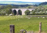 View north over Edlingham Viaduct, Northumberland, in May 2004, half a century after closure of the line.<br><br>[John Furnevel&nbsp;29/05/2004]