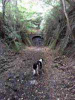 This view shows the southern portal of Combe Down Tunnel - still awaiting restoration in September 2011! [See image 43820]<br><br>[John Thorn&nbsp;05/09/2011]
