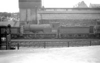Class J35 0-6-0 no 64463 in the shed yard at Hawick on 3 August 1959. <br><br>[Robin Barbour Collection (Courtesy Bruce McCartney)&nbsp;03/08/1959]