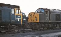 A contrast in noses at Polmadie - class 50 No. 429, the now preserved class 40 No. 306 and an unidentified Peak, probably <br> of the class 45 variety, in the yard on 13th March 1971.<br> <br><br>[Bill Jamieson&nbsp;13/03/1971]