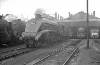 Scene in the shed yard at 36A Doncaster on 7 October 1962, with A4 Pacific no 60029 <I>Woodcock</I> centre stage.<br><br>[K A Gray&nbsp;07/10/1962]