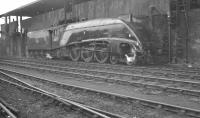 Scene on Heaton shed in February 1962 with A4 Pacific no 60027 <I>Merlin</I> alongside the coaling stage.<br><br>[K A Gray&nbsp;10/02/1962]