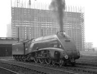 60007 <I>Sir Nigel Gresley</I> is framed by the new Red Road flats under construction in the background as it prepares to move off Balornock Shed on 7 June 1965. <br><br>[K A Gray&nbsp;07/06/1965]