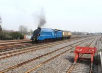 4464 <I>Bittern</I> passing through Swindon on 22 March on its way to a Severn Valley Railway gala. (The blue looked very nice in chocolate and cream territory!)<br><br>[Peter Todd&nbsp;22/03/2012]