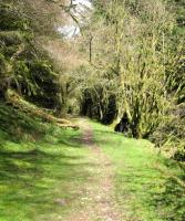 Part of the route of the Bryn Oer Tramway through the woods above the Crawnon Valley, Powys, in April 2004 [see image 38228].<br> <br> <br> <br><br>[John Thorn&nbsp;14/04/2004]