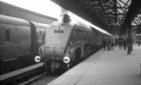 A4 Pacific no 60019 <I>Bittern</I> stands at Buchanan Street in the summer of 1966 after bringing in a train from Aberdeen.<br><br>[K A Gray&nbsp;//1966]