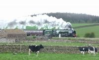 Even the cows seem impressed. The southbound <I>'Great Britain V'</I> running via the Settle & Carlsle line photographed passing Langwathby on 26 April behind 46233 <I>Duchess of Sutherland</I> . <br><br>[Jim Peebles&nbsp;26/04/2012]